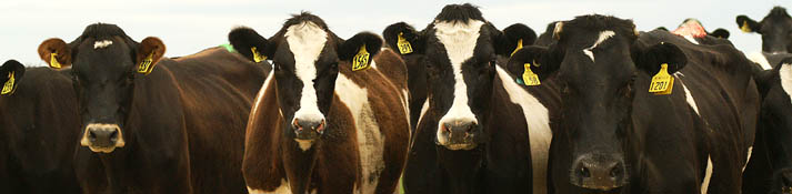 We know our Dairy Cows - CALL US TODAY